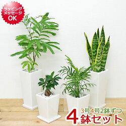 観葉植物 3号 4号 陶器鉢植え 4鉢セット