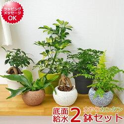 【送料無料】観葉植物 底面給水 おまかせ2鉢セット