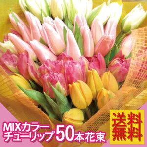 ♪このボリュームでこの価格♪春をお届け!チューリップ花束【送料無料】ミックスチューリップ5...