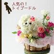 【送料無料】トイプードル(白)のフラワーアレンジメントまるでぬいぐるみみたい☆ふわふわでキュンとしちゃう♪かわいい生花カーネーションギフト