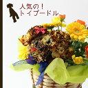 【送料無料】トイプードル(茶)のアニマルフラワーアレンジメントまるでぬいぐるみみたい☆ふわふわでキュンとしちゃう♪かわいい生花カーネーションギフト