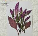 【S-797】押し花 ケイトウキャンドル ピンク 花7枚、葉...