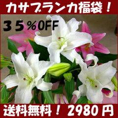 カサブランカ福袋・デパート・高級花屋と、同品質の最高級品です!