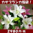 カサブランカ福袋カサブランカとピンク百合の花束【御祝】【記念日】【御供】