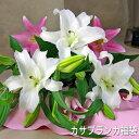 カサブランカ福袋カサブランカとピンク百合の花束【御祝】【記念