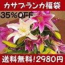 【35%OFF】超一流品質!カサブランカ福袋デパート・高級花屋の取り扱いと、同品質の最高級品で...