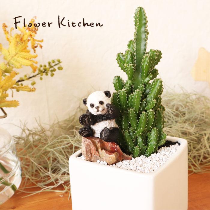 花・観葉植物, 観葉植物  SABOTEN ZOO FKTK