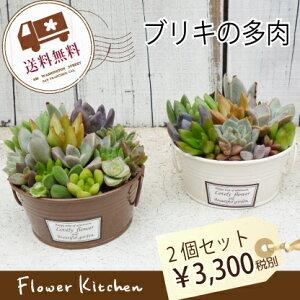 多肉植物 インテリア