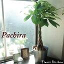 『 パキラ の鉢植え7号鉢 【イケア】【IKEA】 の ソッケル シル...