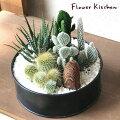 かわいい植物「サボテン」を、おしゃれなインテリアとして取り入れたい!