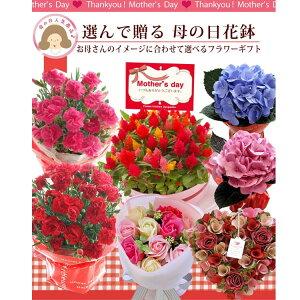 選べる花鉢1980