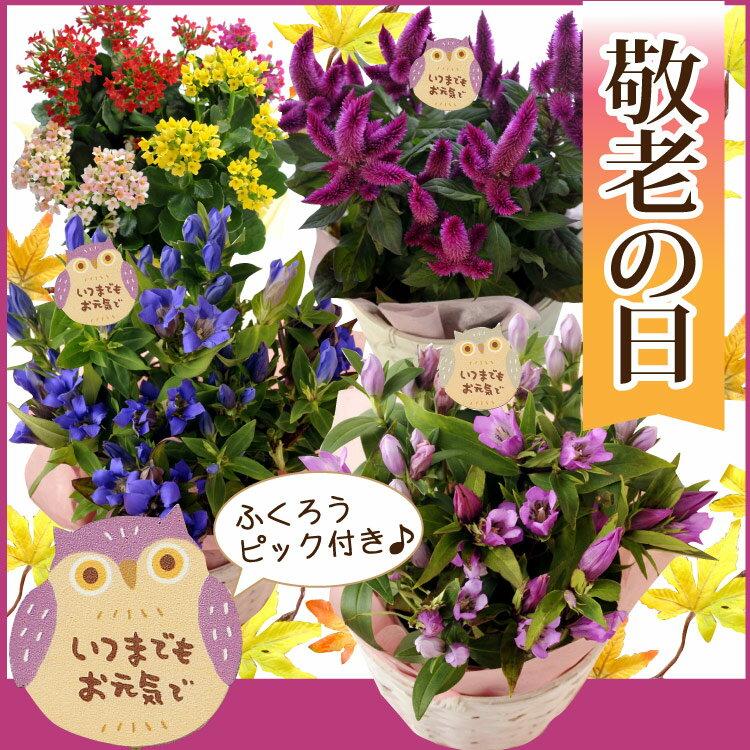 敬老選べる花鉢