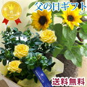 【2021父の日】 父の日 プレゼント【送料無料】 選べる花鉢 黄色バラ or ひまわり鉢植え 花 ギフトおまかせカゴ付き メッセージカード付き 送料無料(一部地域を除く)バラ ヒマワリ 育てる贈り物 植物 2021父の日 花 ギフト FKPP FKTK・・・