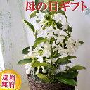 \遅れてごめんね/ 【あす楽】 母の日プレゼント 贈り物 花