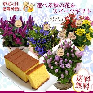 【送料無料】敬老の日選べる花鉢セット