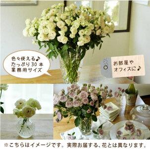 【送料無料】使用イメージ