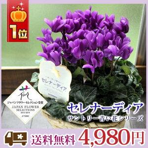 【送料無料】セレナーディア青系シクラメンサントリー青い花シリーズ