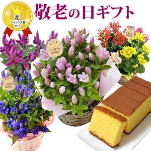 【送料無料】敬老の日選べる花鉢セット+はちみつカステラ