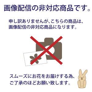 画像配信非対応商品です。