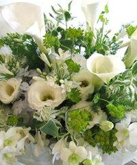 朝10時までのご注文で当日お届け!※お届け先近くのお花屋さんがお届け致します。(当店からの...