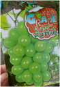 【葡萄】ブドウの女王を抜いた奇跡の晩品!高い糖度、皮ごと食べ