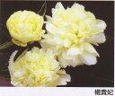シャクヤクその名のごとく、美しい黄色のお花です華やかに咲き誇る花姿は何とも言えません♪高...