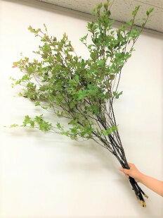 【生花】ドウダンツツジ5本束(90〜100cm丈)【枝物】生け花やお部屋のディスプレイに人気です♪爽やかな葉色が素敵な空間を演出してくれますドウダンツツジ5本束(90〜100cm丈)【枝物】