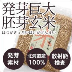 【放射能検査済】北海道産 発芽巨大胚芽玄米 300g