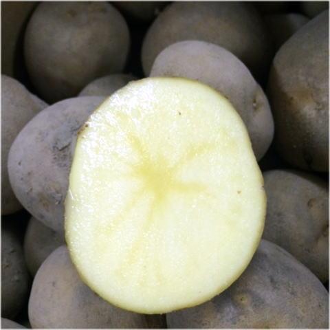 野菜・きのこ, ジャガイモ 5kg