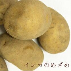 【送料無料】幻のジャガイモ北海道産インカのめざめ(5kg)