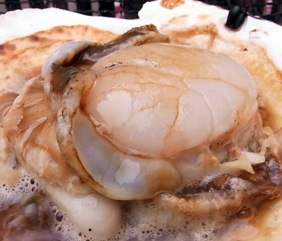 貝類, ホタテ 8