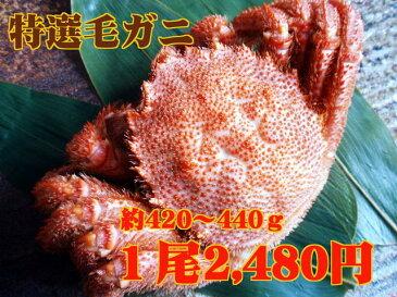 【10尾以上で送料無料!】北海道産毛ガニ(約420〜440g)※年末着日指定OK!