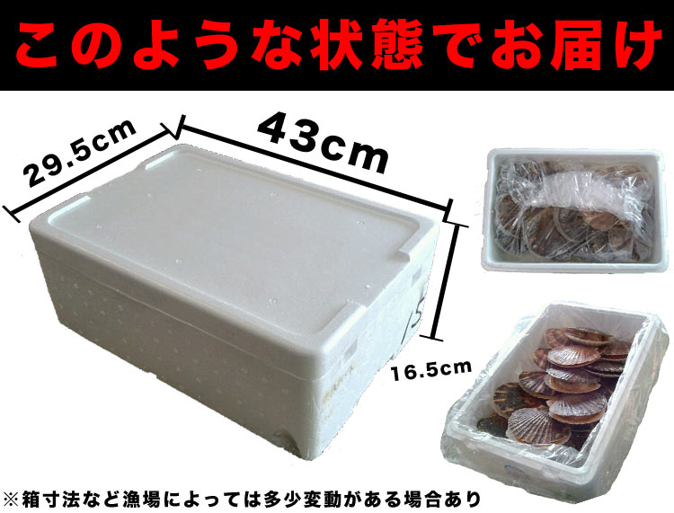 大サイズ北海道産貝付き活ホタテ約3kg分(15枚前後~17枚前後)[活ほたて/帆立/殻付き/生きほたて](冷蔵)
