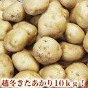 じゃがいも きたあかり約10kg越冬品北海道産(2L〜M混合)[芋/馬鈴薯](3月頃より順次出荷)(常温)