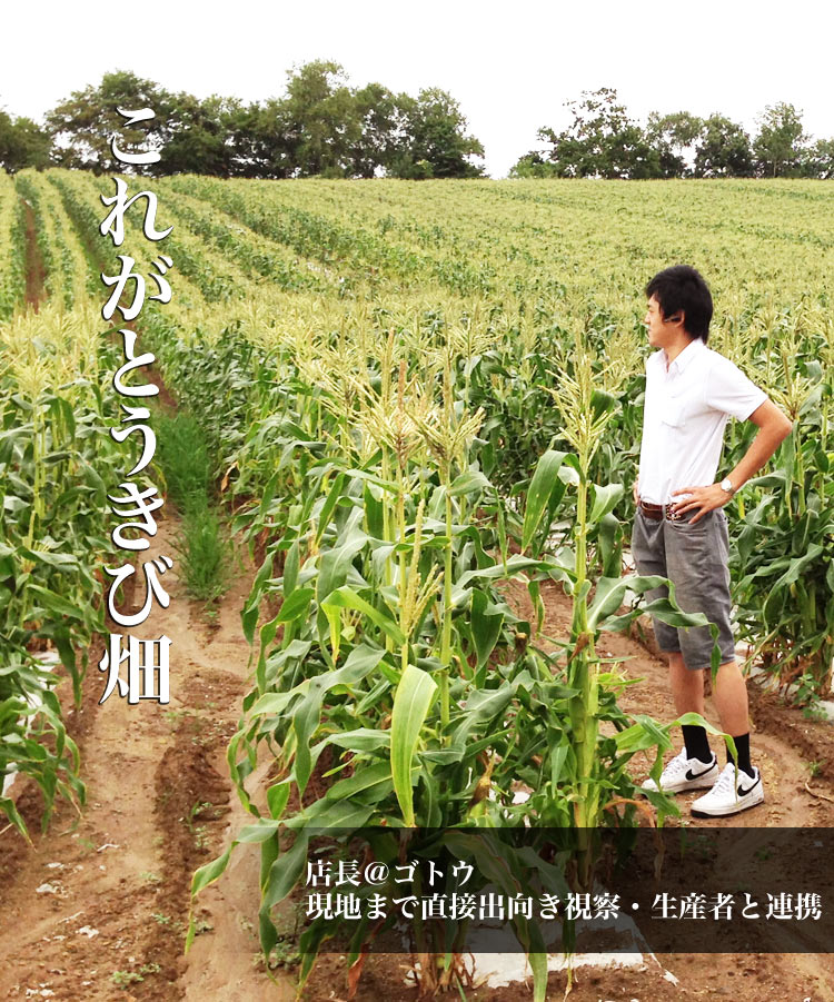 【早割】北海道産ホワイトコーン(大きなL-2L)20本(8月下旬前後頃より順次発送)[白とうもろこし/トウモロコシ][とうきび][スイートコーン](冷蔵)