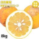 河内晩柑 みかん 和製グレープフルーツ 訳あり 8kg S〜...