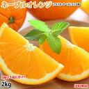 ネーブルオレンジ みかん 送料無料 2kg 3箱購入で1箱お