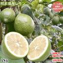 レモン 国産レモン 送料無料 2kg S〜L 3箱購入...
