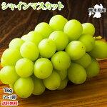 シャインマスカットぶどう送料無料1kg2〜3房熊本県産3箱購入で1箱おまけマスカット葡萄ブドウ