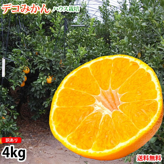 デコポン 同品種 デコみかん 訳あり 送料無料 4kg ハウス栽培 みかん 熊本県産 不知火 ミカン 蜜柑