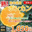 ポンカン 訳あり 送料無料 1.5kg S〜2L 熊本県産 ...