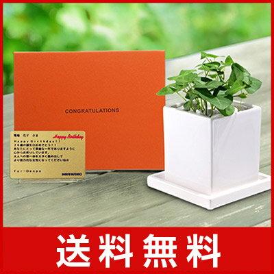 電報 結婚式 誕生日 お祝い電報 祝電 送料無料 観葉植物