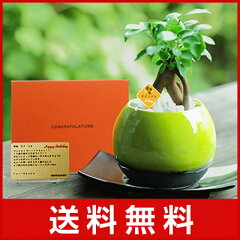 電報 結婚式 誕生日 お祝い電報 祝電 送料無料 観葉植物 【ガジュマルグリーン メッセージ】