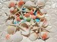 天然素材 A品 スターフィッシュ コブヒトデ カラーシェル 白い 貝殻セット ハワイインテリア ブライダル 手作り素材 クラフト 工作材料 マリン雑貨