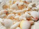 天然素材 白い 貝殻 500gパック ホワイト シェル セレクト ハワイ インテリア ディスプレイ 手作り 工作材料