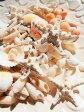 天然素材 A品 コブヒトデ 白いサンゴ 色々な貝殻セット ハワイインテリア ブライダル 手作り素材 クラフト 工作材料 マリン雑貨