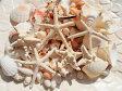 天然素材 ハワイアンインテリア 貝殻セット 大容量パック ブライダルディスプレイ 工作クラフト材料