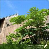 ガーデンデザインの提案神奈川県・東京都他関東エリアの方・代表設計責任者が現場打ち合わせに伺います!