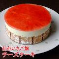 フロム蔵王仙台いちご畑チーズケーキ4号