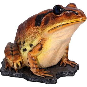 FRPアニマルオブジェ 巨大な縞足ガエル 置物 動物 蛙 かえる 両生類 動物園 店舗 イベント ディスプレイ 実物大 等身大 リアル 【whlny】